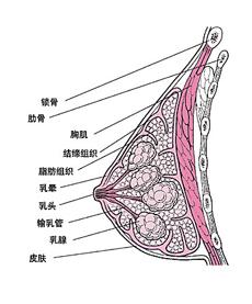 乳腺纤维腺瘤