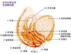 卵巢炎造成的不孕