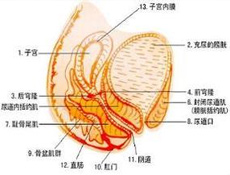 慢性盆腔炎的发病率为什么较高