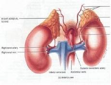 肾上腺皮质增生症状